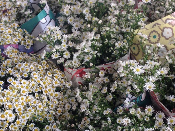 Il Buongiorno di oggi con un mazzo di margherite. Questi fiori, tritati insieme alle foglie fresche, sono utili per lenire contusioni e distorsioni #oltreilbalcone #dilloconifiori #green #sapevatelo #piante #mazzolino #margherita