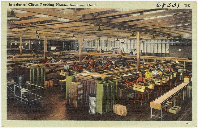 Interior of citrus packing house southern calif for Southern california interiors