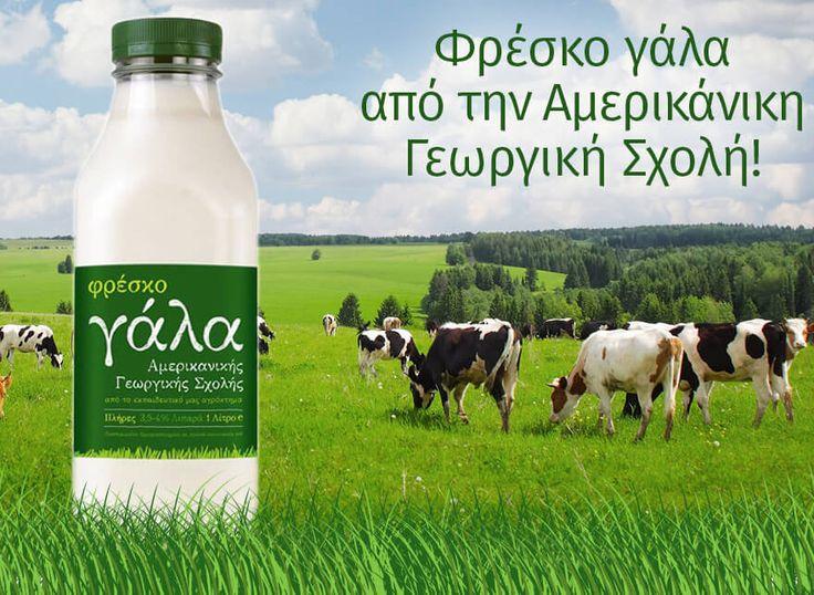 Φρέσκο γάλα από την Αμερικάνικη Γεωργική Σχολή!! 🐮 🌾 Bρείτε το στο e-fresh.gr http://www.e-fresh.gr/trofima/galaktokomika?food_brand=6074