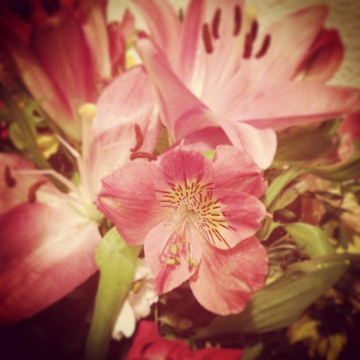 Flores #14de30 #photooftheday #onedayonepic #monthchallenge #november #tiltshift #earlybird #flowers #nature #pink #detail