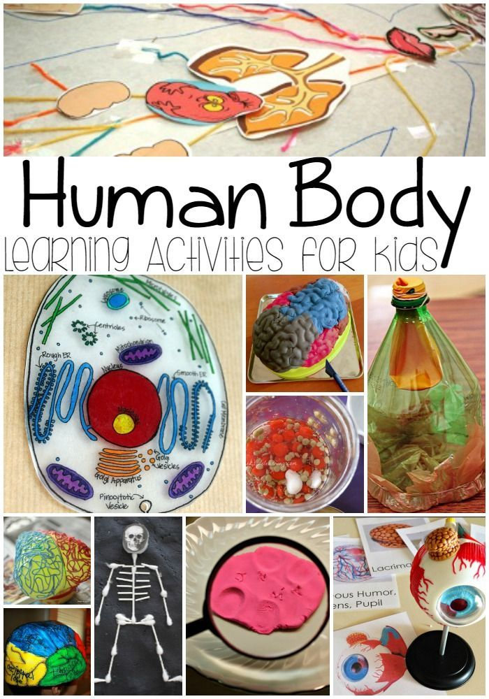 Human Body Learning Activities For Kids Human Body Theme