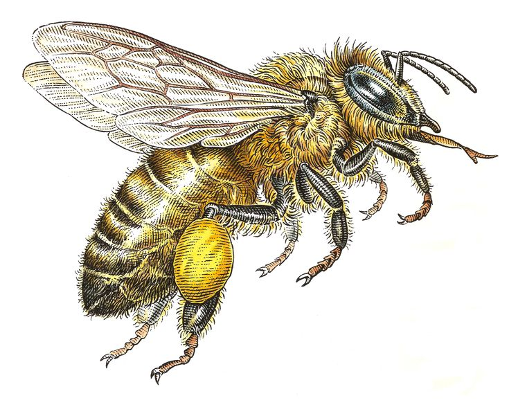 Bee By Dave Hopkins