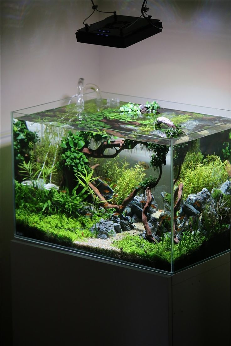Small nano aquarium fish tank tropical - Remarkable Small Aquarium Fish Ideas And Aquascape Designs Modern Pet Room Ideas Modern Pet Room