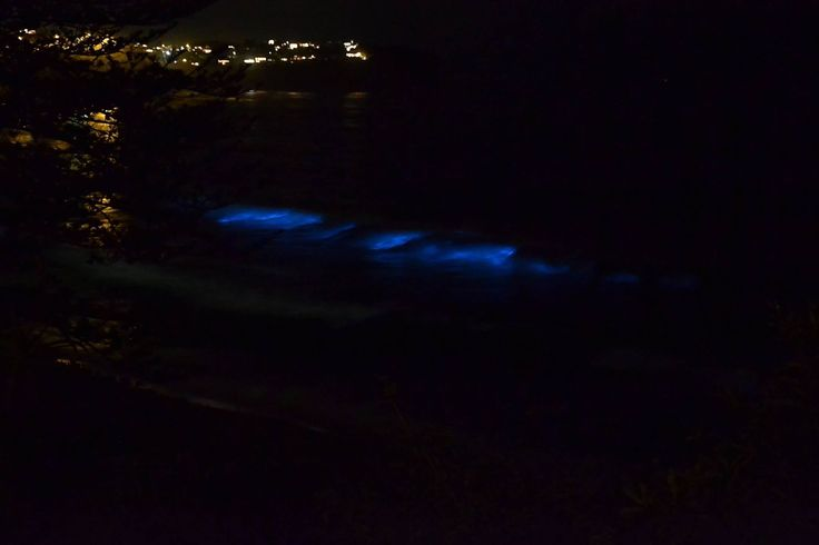 This is from my house I'm so lucky! Phosphorescent algae