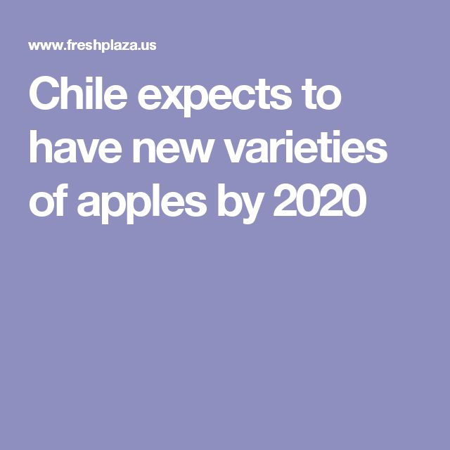 Chile expects to have new varieties of apples by 2020