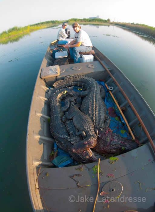 Grosse Savanne - Waterfowl and Wildlife Lodge - Louisiana alligator hunting…