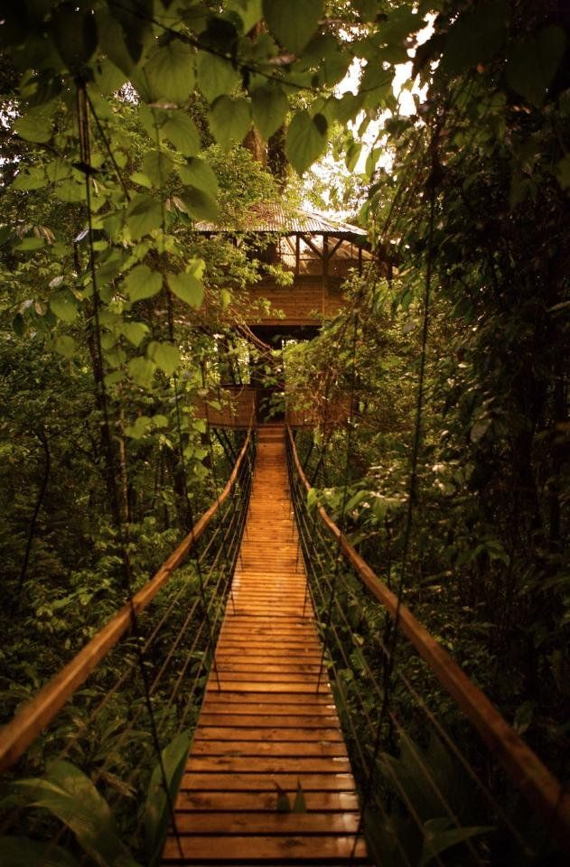 Old-school wooden bridge, one way to connect tree houses in Costa Rica. :)