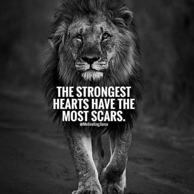 Lion Quotes And Sayings 25+ best Lion q...