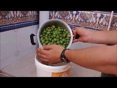 Como hacer aceitunas del modo tradicional. - YouTube