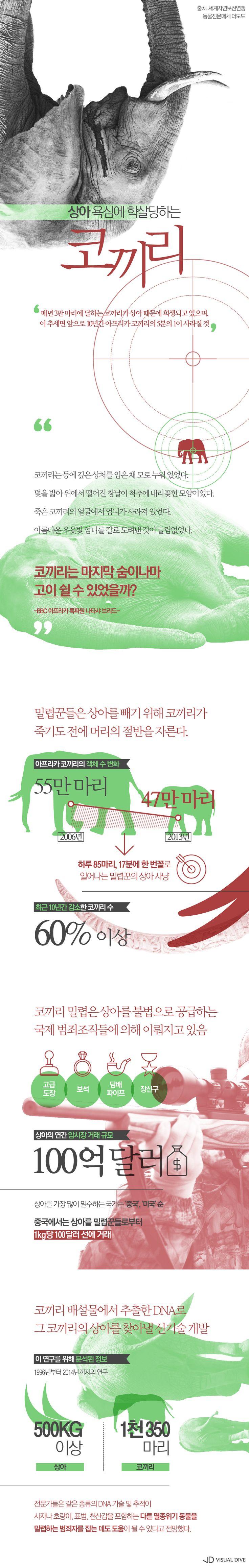 상아 욕심에 학살당하는 코끼리…10년 새 60% 이상 감소 [인포그래픽] #elephant / #Infographic ⓒ 비주얼다이브 무단 복사·전재·재배포 금지