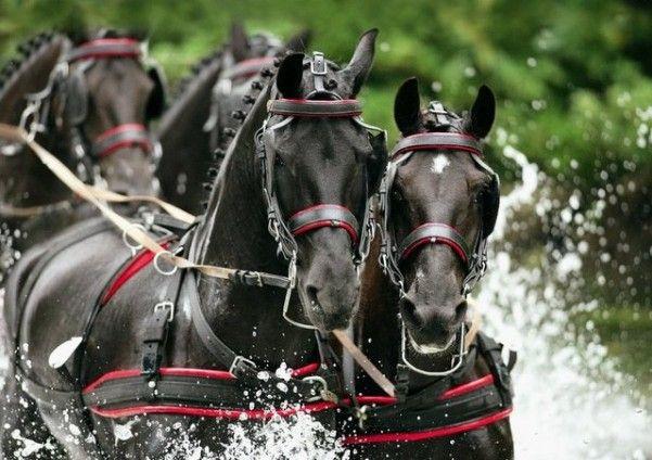 fahren pferd