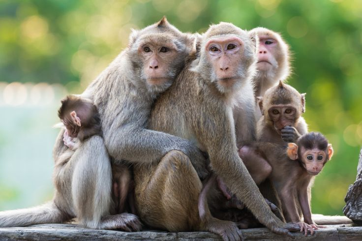 Monkeys have it tough in the English language. Generally speaking, being called…