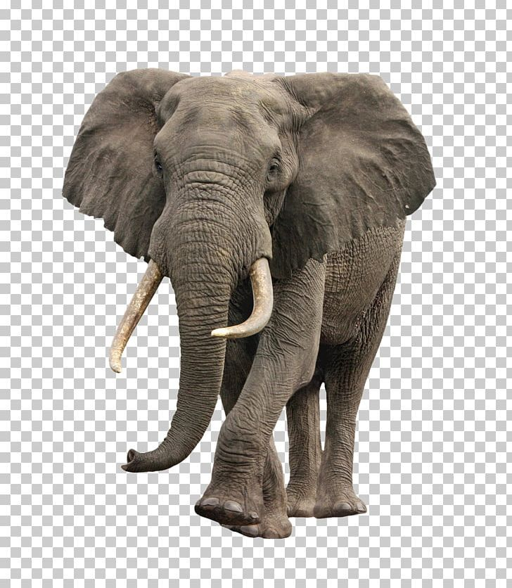 Elephant Png : All images is transparent background and free download.