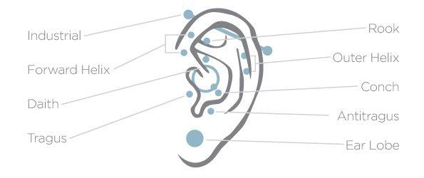 as 25 melhores ideias de ear piercing diagram no pinterest