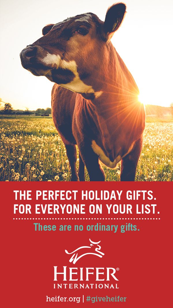 This holiday season, shop Heifer International's Most Important Gift Catalog in the World. Buy your mom a gift of women's empowerment, gift your co-worker with a flock of chicks, and give your whole family a goat! It's a great way to shop for everyone on your list!