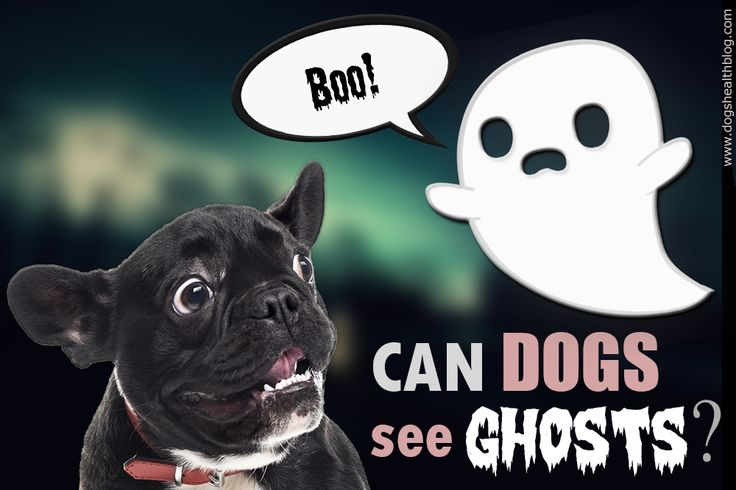 Can Dogs see Ghosts?