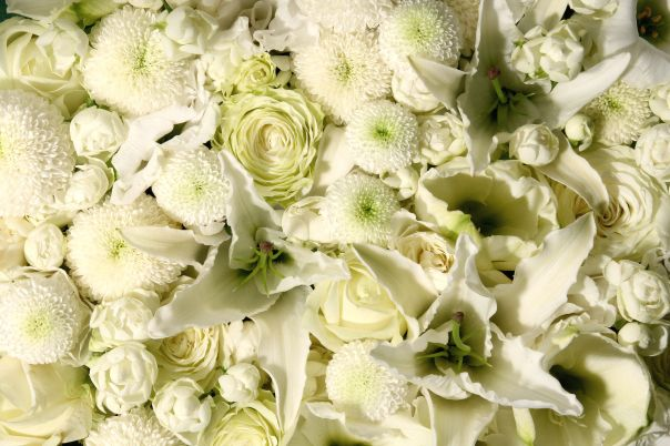 A blanket of white flowers: Roses, Dahlias, Lilies and Peonies.