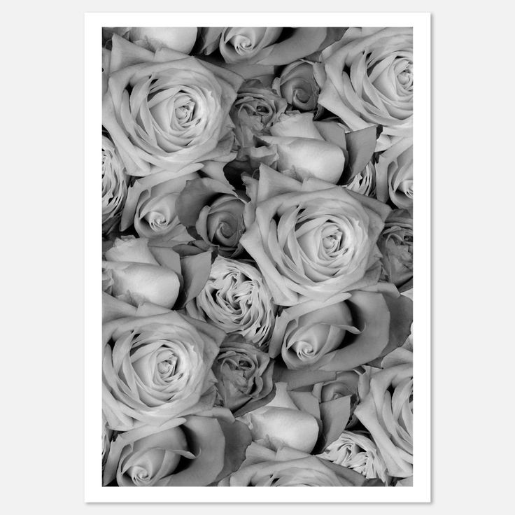 Roses Art Print Hector Rose
