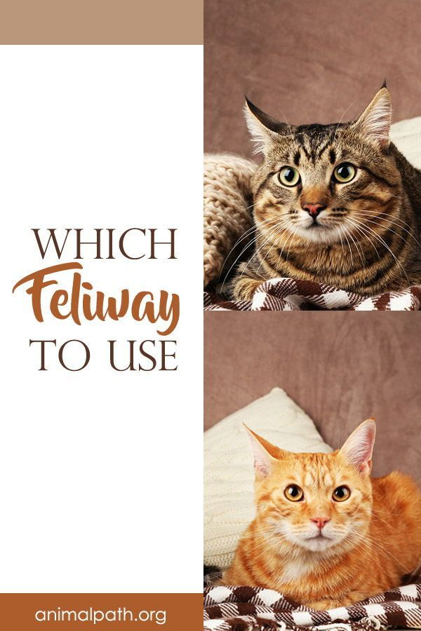 Which Feliway To Use In 2020 Cats Vet Visits Your Pet