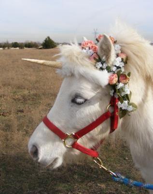 Kangaroo Kate's Pony Rides and Pony Parties DFW party. Unicorn ponies