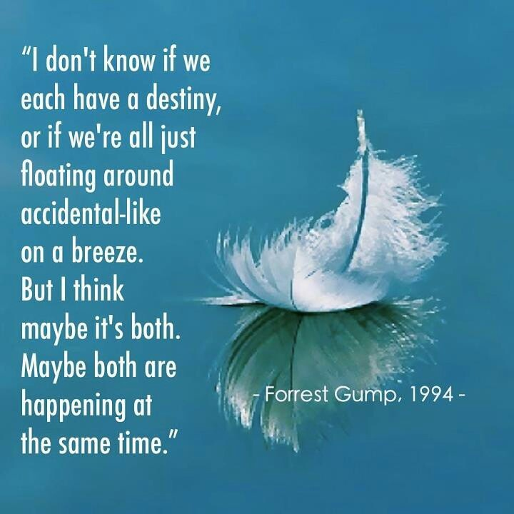 """Forrest Gump Shrimp Quotes: """"I Don't Know If We Each Have A Destiny, Or If We're All"""
