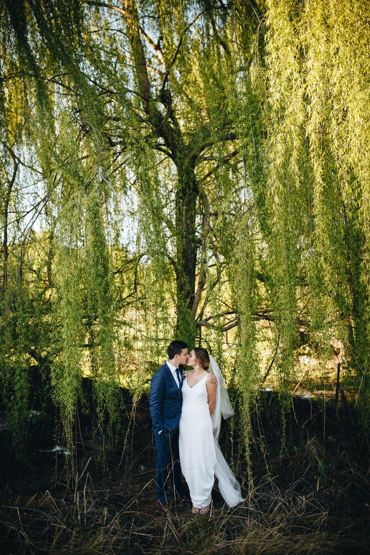 willow trees of love