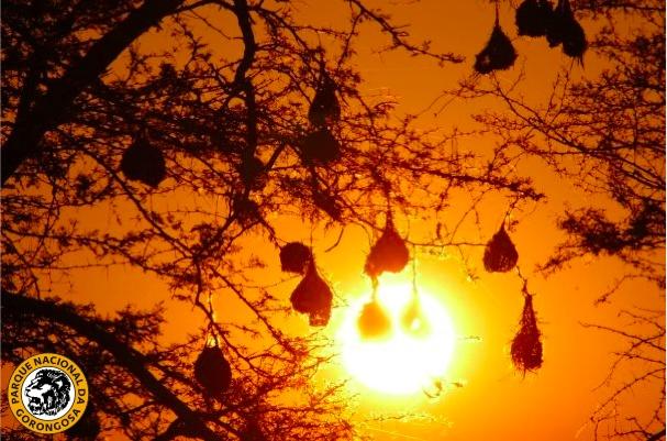 A gorgeous Gorongosa sunset:http://on.fb.me/12qR7ST