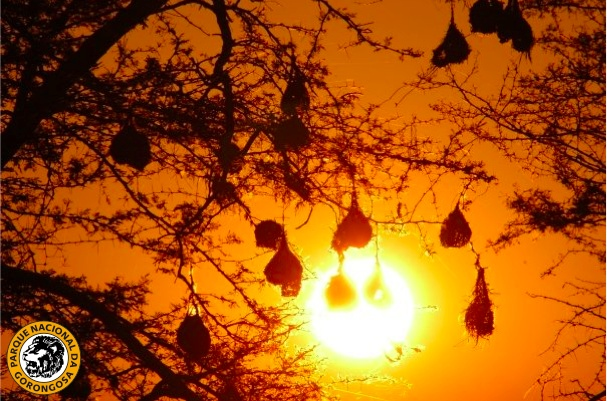 A gorgeous Gorongosa sunset: http://on.fb.me/12qR7ST