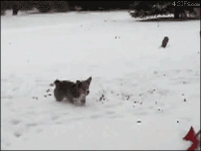 The acrobat. | 51 Corgi GIFs That Will Change Your Life @Gracie Herbert WATCH ALL OF THEM BUT ESPECIALLY THIS ONE
