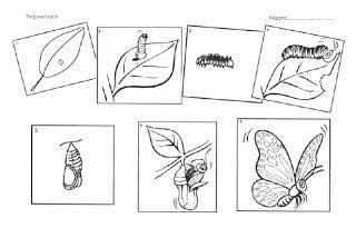 Cyclus vlinder (schrijfwerkblad!)