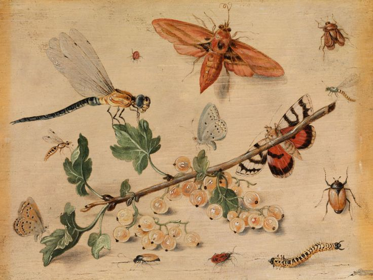 103 best Jan van Kessel I and II images on Pinterest | Bugs, Insects ...