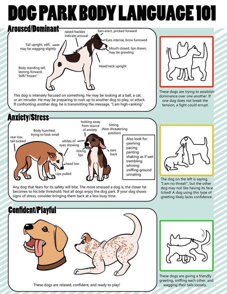 Dog Body Language/ Dog Park Body Language