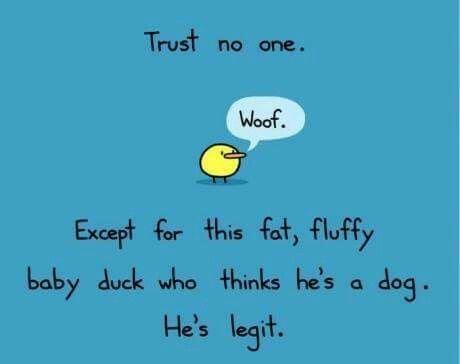 Legit Duck :)