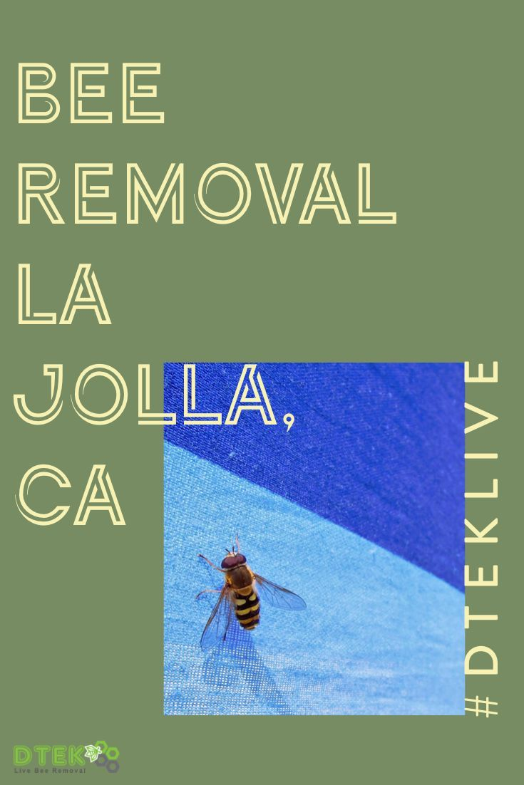 Bee Removal La Jolla Ca Bee Removal Bee Problem How To Remove