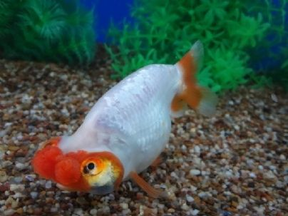1000+ images about Freshwater fish.etc. on Pinterest ...