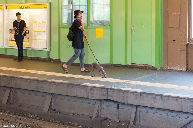 Walking the dog... - https://millqvist.se/wp-content/uploads/D17_20170728-31_510.jpg - https://millqvist.se/?p=822