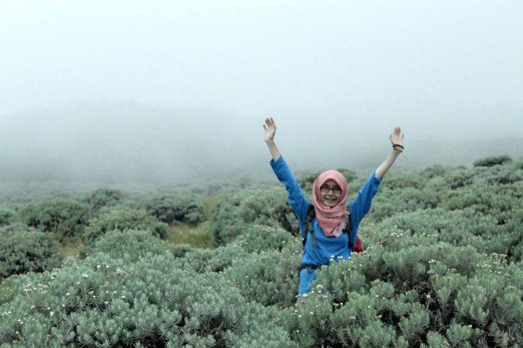 padang edelweiss-papandayan mt-garut-jawa barat