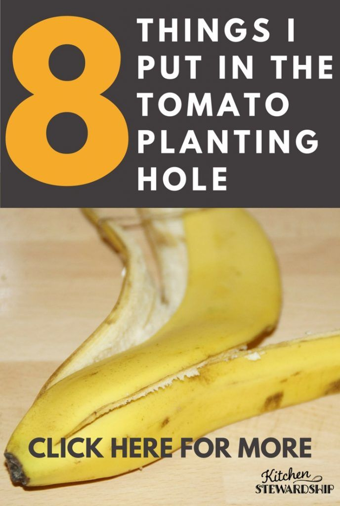 The EIGHT things - besides a tomato plant - in the soil when I get the seedlings in? Every one has a purpose, like the banana peel to feed...and the all-important blight buster, too!