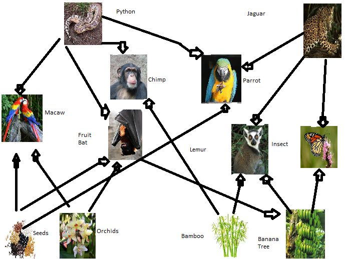 tropical rainforest food web - Google Search