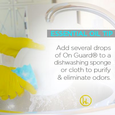 Ever have a dish cloth or sponge not smell so good?? We have all been there. Here is an easy tip ==> on a regular basis add a few drops of On Guard to your sponge or dishcloth to purify and eliminate odors. This will help remove unwanted smells and bacteria. Everyone loves a clean kitchen! #wholeyou www.hayleyhobson.com