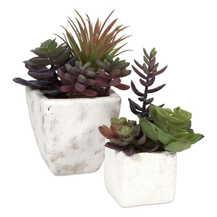 Wolek Potted Succulents - Set of 2 | Nebraska Furniture ...