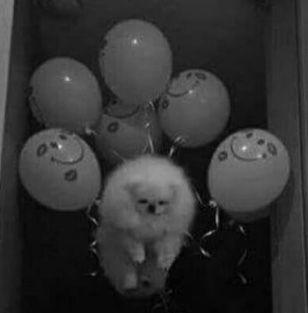 what dank meme cursed images image pupper doggo animal dog puppy balloon sad