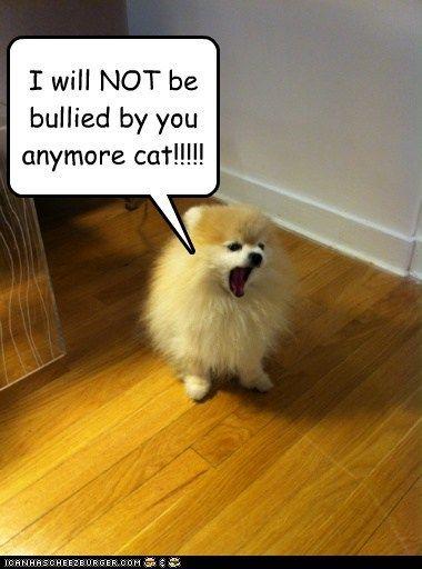 Cats, Memes and Pomera...