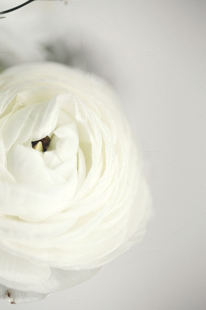 White flower arrangement by rgarton on Creative Market