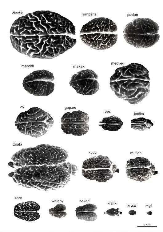 blog vgrafik  » Blog Archive   » Brain