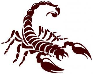 Scorpion Tattoo                                                       …