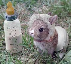 Risultati immagini per coniglietti bianchi