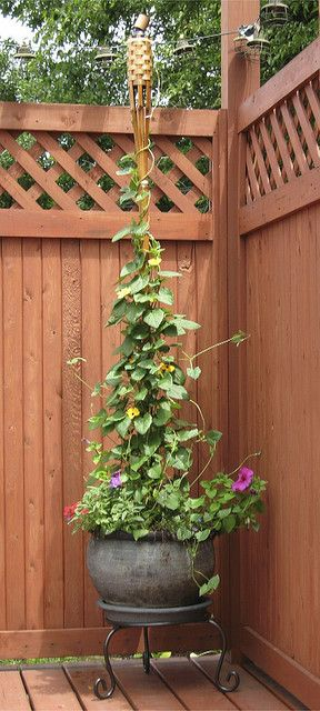 Tiki torch- maybe I'll plant morning glory vines around 3 bamboo poles (instead of the tiki torch) to make a tall garden focal point!