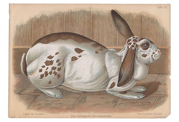The Lorraine Rabbit, 1902 on OneKingsLane.com
