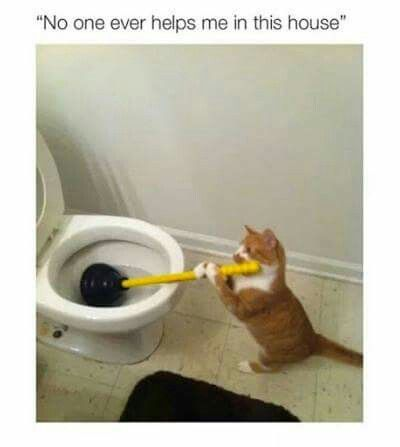132 best cats images on pinterest kittens kitty cats and funny helping sciox Image collections